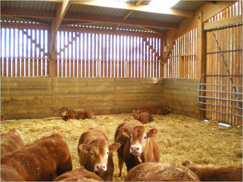 Batiment agricole ovin en bois de douglas de 1080 m2 dans la vienne une r ali - Batiment agricole en bois ...